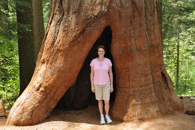Lisa standing in a sequoia stump in Tuolomne Grove