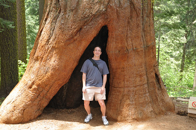 Patrick standing in a sequoia stump in Tuolomne Grove