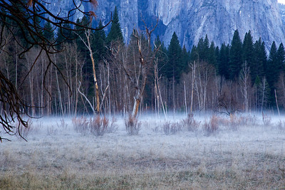 YOS-140224-0002 Meadow with Ground Fog