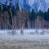 YOS-140224-0002<br /> Meadow with Ground Fog