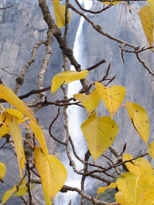 YOS-121201-0011 Upper Yosemite Falls and Leaves