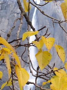 YOS-121201-0011 Upper Yosemite Falls and Leaves