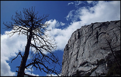 Dead Tree and Granite Wall, Yosemite Valley