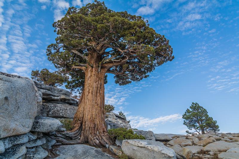 Yosemite Giant
