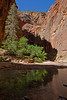 Zion River Reflections