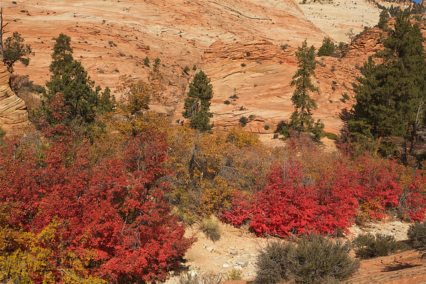 ZNP-171020-0014<br /> Fall Colors #2