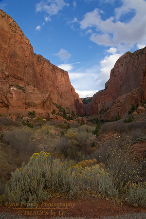 ZNP-Kolob-171020-0002<br /> Kolob Section in Zion National Park #2