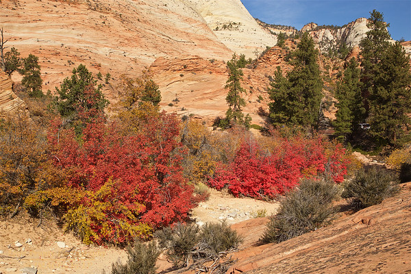ZNP-171020-0015<br /> Fall Colors #3