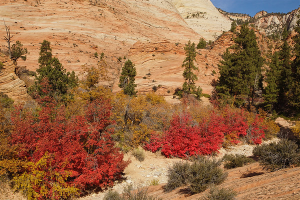 ZNP-171020-0013<br /> Fall Colors #1