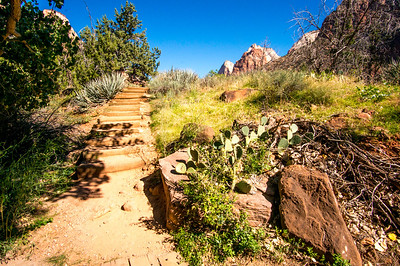 Zion-National-Park_052