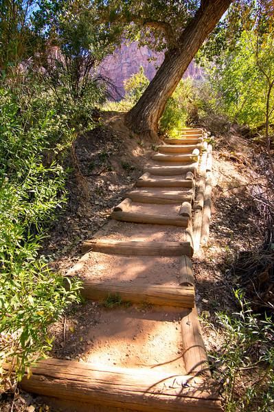 Zion-National-Park_051