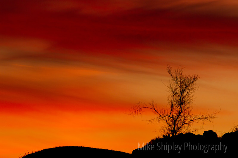 Naked Tree at Sunset, CU, Joshua Tree National Park