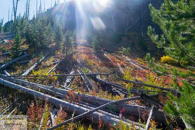 Yellowstone Sunrays