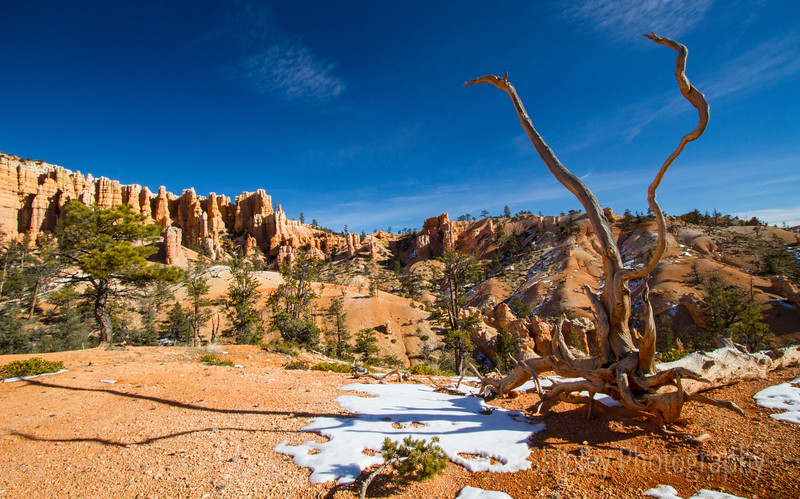 Tree and it's Shadow, Bryce Canyon National Park
