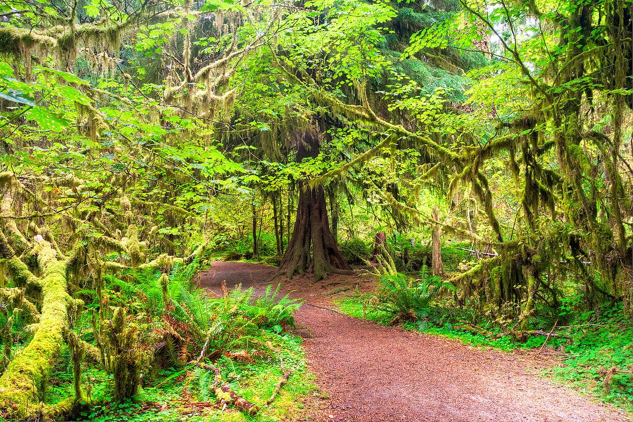 2100 Rain Forest
