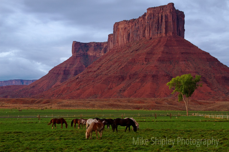 Horses outside Arches National Park, Pano