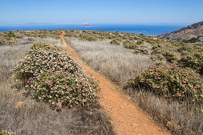 Santa Cruz Island Trail