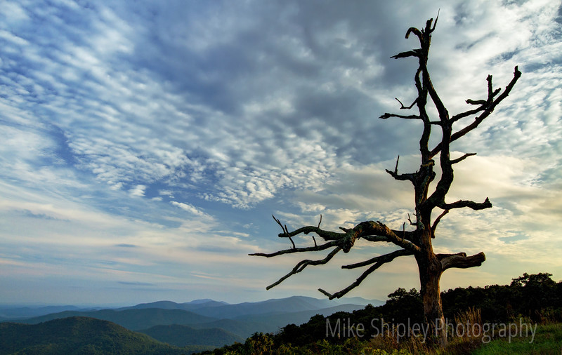 Old Tree over the Mountains, Shenandoah National Park