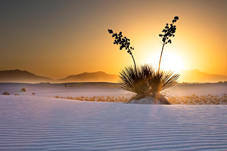 2345 White Sands