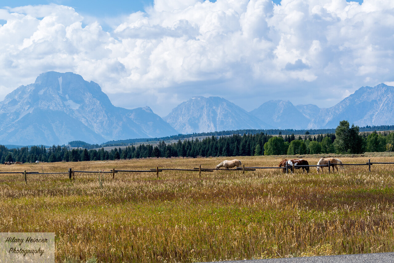 Horses in Grand Teton
