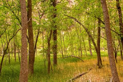 Woods Near Virgin River