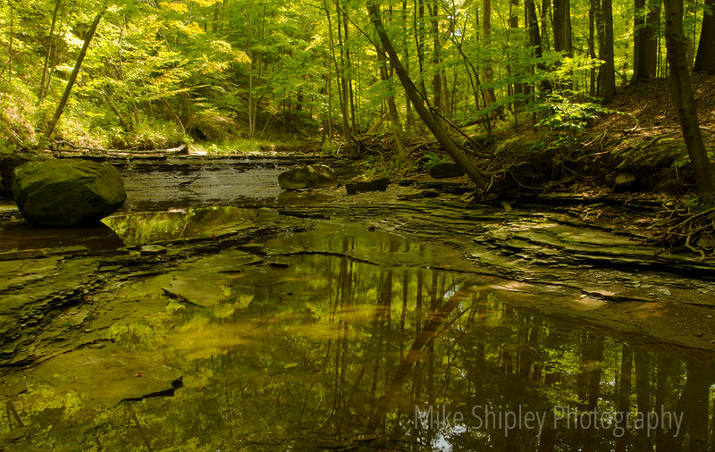 Forest Reflection, Cuyahoga National Park