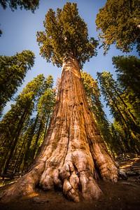 General Sherman, Sequoia National Park, California