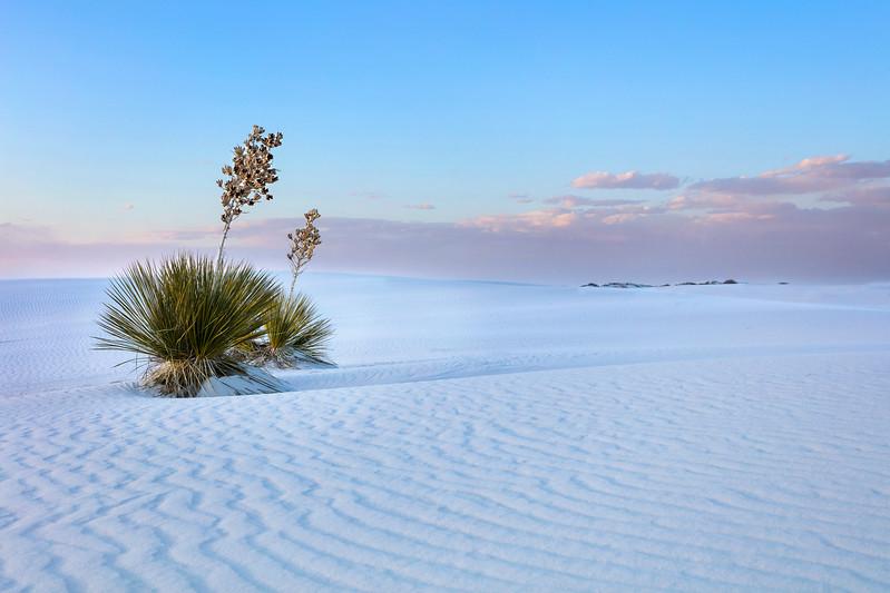 2428 White Sands