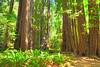 373 Redwood Trees