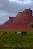 Horses outside Arches, Arches National Park