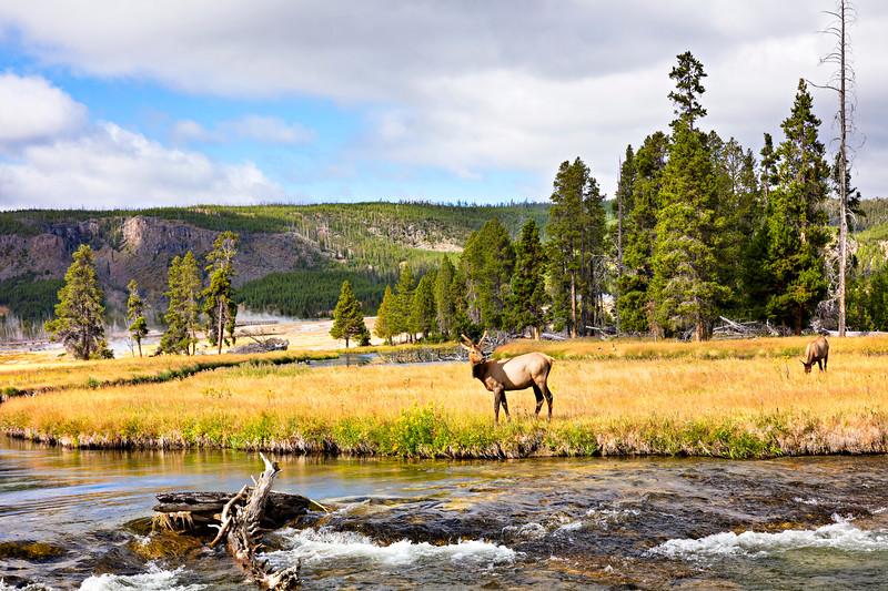 4052 Deer