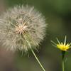 Bloom & Seeds