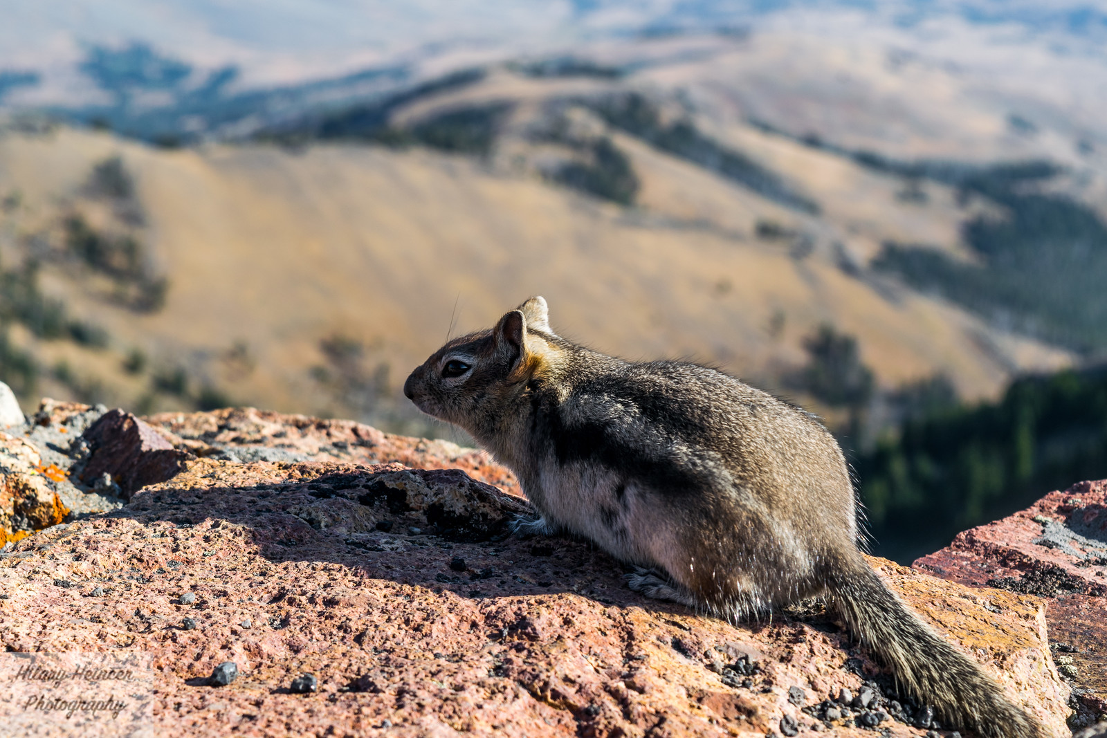 Squirrel on top of the world