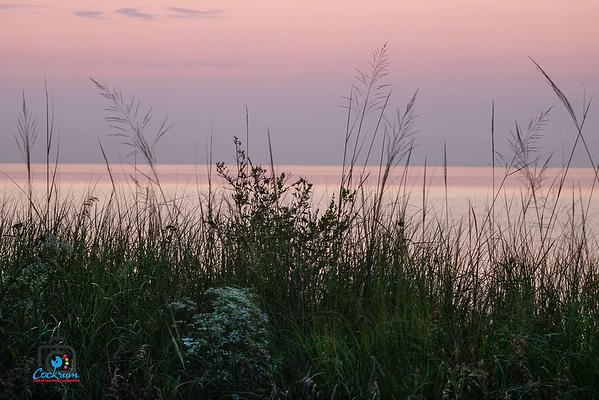 Dune Grasses, Indiana Dunes National Park