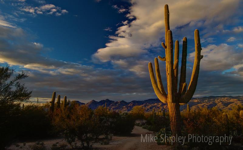 Single Saguaro with Santa Catalina Mountains, Saguaro National Park