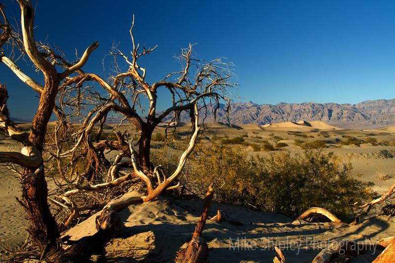 Mesquite at Sunset, Death Valley National Park