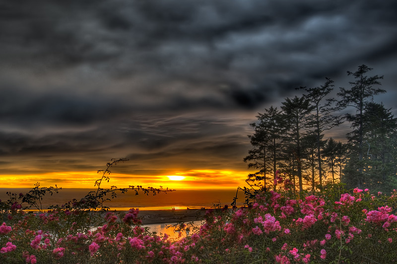 Flora vs. Sunset