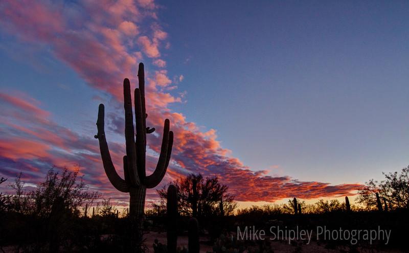 Pink Skies over Saguaro, Saguaro National Park