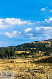 Lamar Valley Landscape