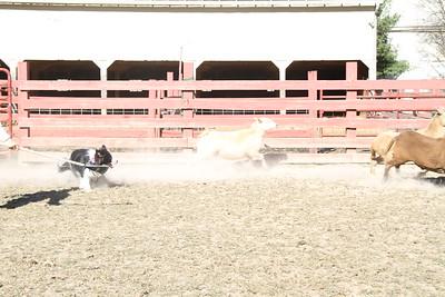 Herding Instinct: Barbara-Yankee