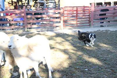 Herding Instinct: Diane-Quinn; Debby-Slyder