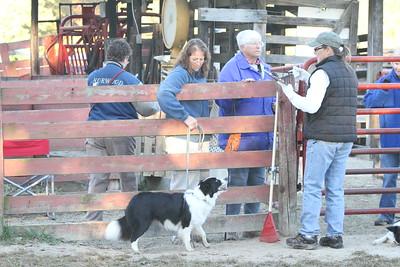 Herding Instinct: Julie-C.C.