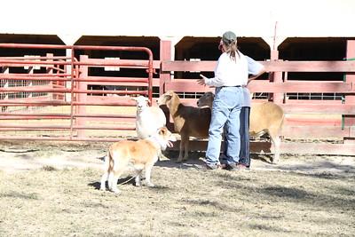 Herding Instinct: Karen-Bette; Amy-Annie; Karen-Allie