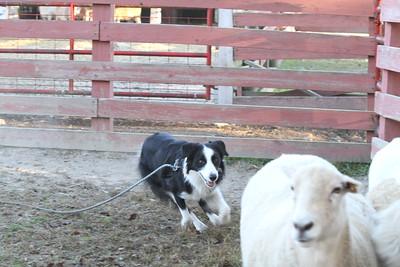 Herding Instinct: Lisa-Ben; Barb-Fly