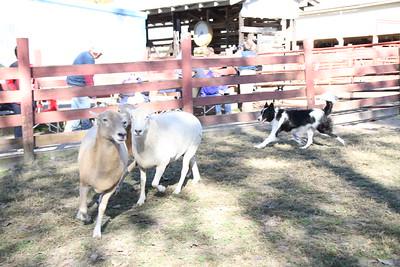 Herding Instinct: Lucinda-Taser & Liz-Kahless