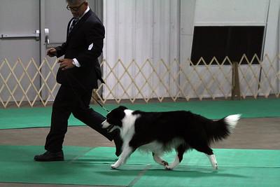 National BOB-1st Group Dogs