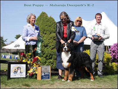 Best Puppy AB 39  #6018 Classique Photos EMAIL