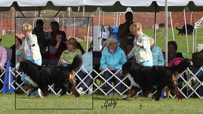 Best of Breed Candid Shots #1