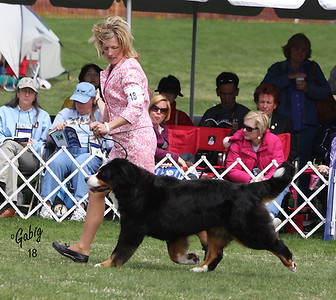 Best of Breed Candid Shots #3