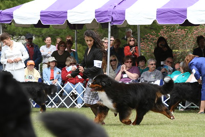 Best of Breed Dogs (1st & 2nd cuts)